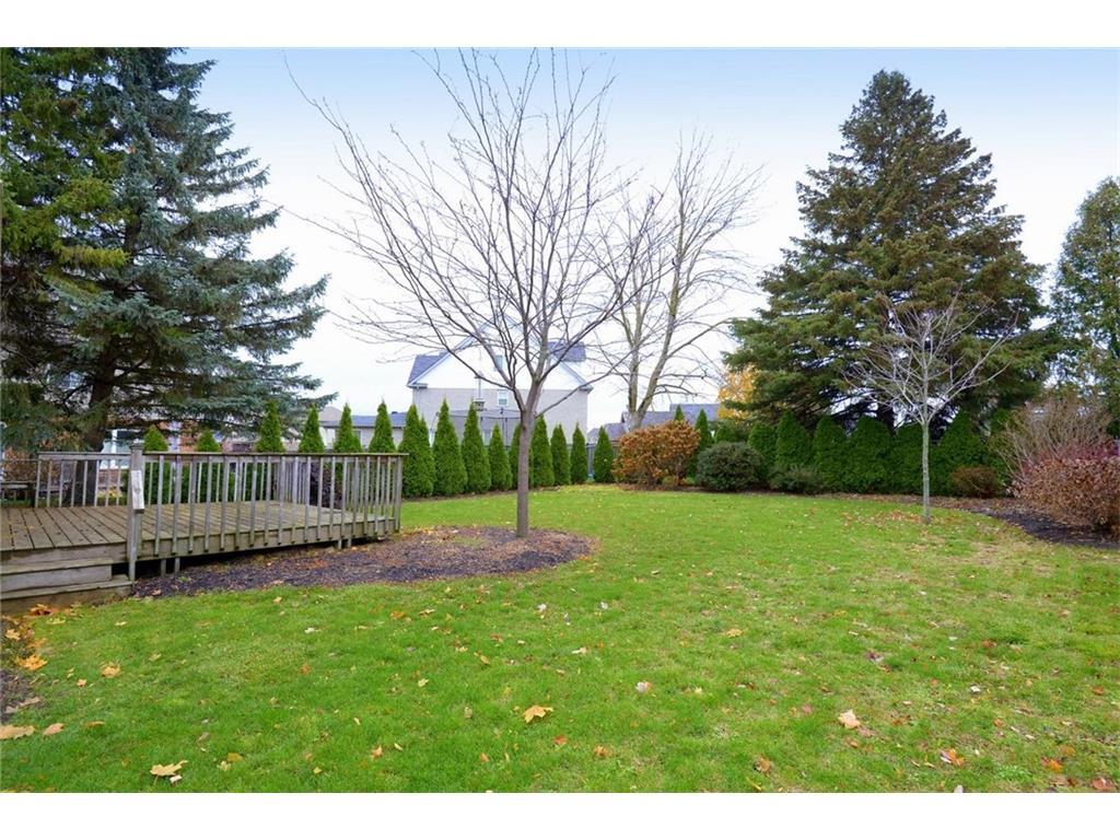 9 Birchbank Boulevard - Rear Garden